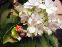 Elves and love. Are elves and love in a garden stock images