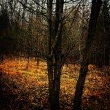Elvish Forrest. Enchanted Magical Trees Stock Image
