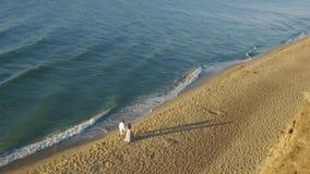 Elvovedpaar die op kust in avondtijd lopen Romantisch paar die langs de handen van de kustlijnholding wandelen stock video