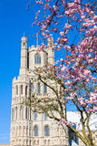 Ely cathedral Stock Images