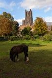 Ely Cathedral und Dekans Meadow, Cambridgeshire Stockfoto