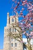 Ely-Kathedrale Stockbilder