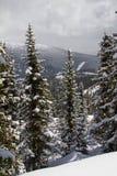 Ely sur le fond d'un excellent paysage de montagne Photographie stock libre de droits