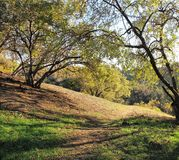 Elyria Canyon Park. Trees shading a trail in a park, California Stock Image