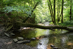 Elzbach stream at forest next to pyrmont Germany Royalty Free Stock Images
