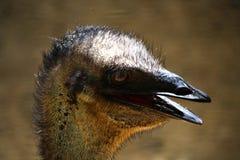Emú Fotos de archivo