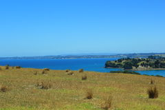 Em algum lugar em Nova Zelândia Fotos de Stock