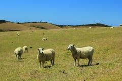 Em algum lugar em Nova Zelândia Imagem de Stock
