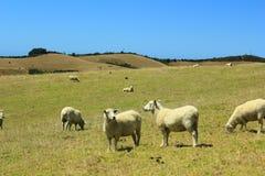 Em algum lugar em Nova Zelândia Fotografia de Stock