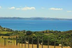 Em algum lugar em Nova Zelândia Fotografia de Stock Royalty Free