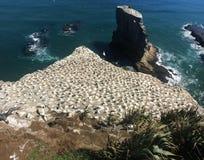 Em algum lugar em Nova Zelândia Foto de Stock