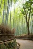 Em junho de 2012: Arashiyama, Kyoto, Japão: Um trajeto de bambu que olha o trajeto que curva-se afastado para o lado de mão esque Imagem de Stock