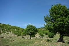 Em montanhas de Macin Fotos de Stock Royalty Free