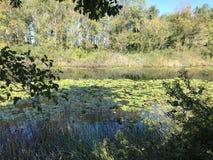 EM OUTUBRO DE 2018, a floresta de água doce em segundo a mais grande do pântano de Turquia: Acarlar em Sakarya, Turquia fotografia de stock