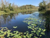 EM OUTUBRO DE 2018, a floresta de água doce em segundo a mais grande do pântano de Turquia: Acarlar em Sakarya, Turquia fotos de stock royalty free