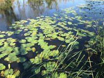 EM OUTUBRO DE 2018, a floresta de água doce em segundo a mais grande do pântano de Turquia: Acarlar em Sakarya, Turquia imagens de stock royalty free