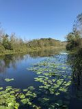 EM OUTUBRO DE 2018, a floresta de água doce em segundo a mais grande do pântano de Turquia: Acarlar em Sakarya, Turquia foto de stock