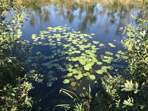 EM OUTUBRO DE 2018, a floresta de água doce em segundo a mais grande do pântano de Turquia: Acarlar em Sakarya, Turquia imagem de stock royalty free