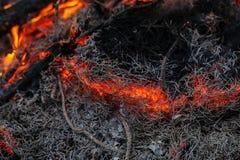 Em ramos ardentes e em árvores de um incêndio florestal do pinho Fotografia de Stock Royalty Free