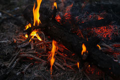 Em ramos ardentes e em árvores de um incêndio florestal do pinho foto de stock royalty free