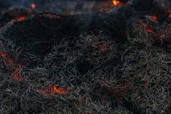 Em ramos ardentes e em árvores de um incêndio florestal do pinho imagem de stock