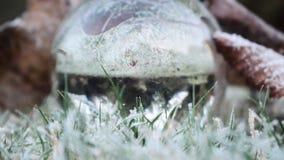 Em seu próprio jardim traseiro 7 Foto de Stock Royalty Free