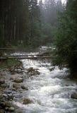 Em torno de Zakopane, um córrego da montanha na maneira a Morskie Oko Fotografia de Stock