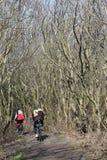 Em um bosque entre as dunas da ilha de Sylt imagens de stock royalty free