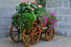 Em um carro de madeira das flores Fotos de Stock