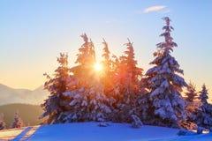 Em um dia bonito gelado entre montanhas altas e picos são as árvores mágicas cobertas com a neve branca contra a paisagem do inve fotos de stock