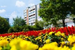 Em um fundo do céu, as flores na cidade Foto de Stock