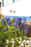 Em um jardim. imagem de stock royalty free