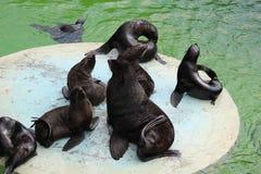 Em um jardim zoológico Fotos de Stock Royalty Free