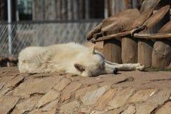Em um jardim zoológico Imagem de Stock Royalty Free