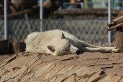 Em um jardim zoológico Fotografia de Stock Royalty Free