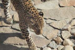 Em um jardim zoológico Imagens de Stock Royalty Free