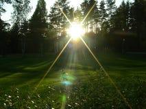 Em um prado verde o por do sol olha o ponto luminoso, iluminando as folhas Fotos de Stock Royalty Free