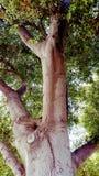 Em uma árvore Fotografia de Stock