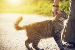 Em uma estrada uma mulher que afaga um gato desabrigado macio fotografia de stock royalty free