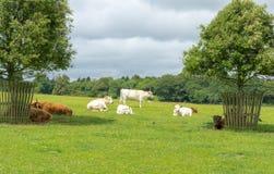 Em uma exploração agrícola Imagem de Stock