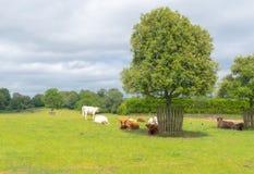 Em uma exploração agrícola Foto de Stock Royalty Free