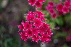 Em uma flor completa Foto de Stock