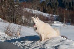Em uma neve profunda Fotos de Stock Royalty Free
