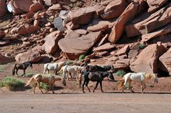 Emaciated horses in the desert of Monument Valley Stock Image