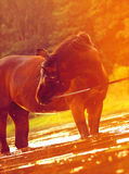 Emagic Portrait des Pferds auf Sonnenuntergang Lizenzfreie Stockfotos