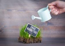 Emailmarknadsföringsbegrepp Nytt och grönt gräs på wood bakgrund royaltyfri fotografi