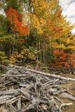 Emaranhado da madeira lançada à costa e da folhagem de outono no lago flagstaff, Maine foto de stock royalty free