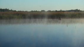 Embaçamento da manhã acima do lago imagem de stock