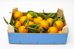 Embalaje con los mandarines Imagen de archivo libre de regalías