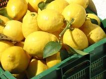 Embalaje de limones Imágenes de archivo libres de regalías